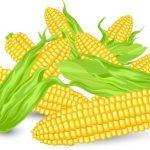 とうもろこしは野菜or炭水化物?米&パンに次ぐ世界三大穀物でダイエット向きではない・・・